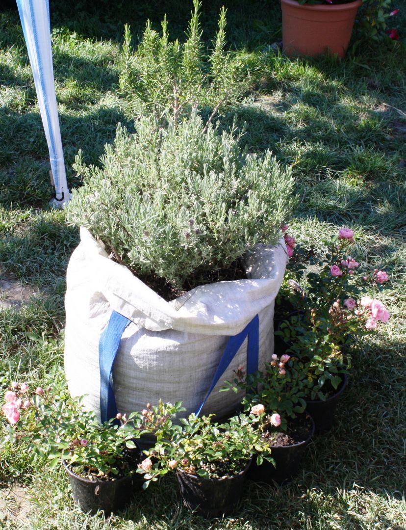 urban gardening ist auch pflanzung auf kleinstem raum vereine in das vereinsportal. Black Bedroom Furniture Sets. Home Design Ideas